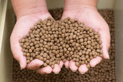 Pellet fsh feed. On hand Royalty Free Stock Image