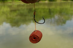 Pellet on hook. The hair rig is a piece of fishing tackle which allows a bait to be presented without sitting directly on the hook. It is mainly associated with Royalty Free Stock Photos
