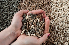 Pellets. Different kind of pellets in female hands- pine,beech,sunflower Stock Photography