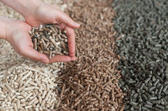 Pellets. Different kind of pellets in female hands- pine,beech,sunflower Stock Photos