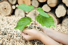 Pellets- Biomas. Young tree in female hands over a heap of pelets Royalty Free Stock Photo