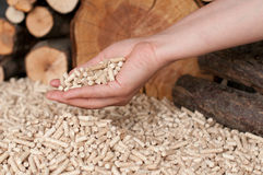 Pellets- biomass Fotografia Stock