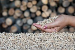 Pellets- biomass. Pellets in female hands-selective focus on the heap and hand Stock Image