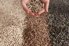 Pellets- biomass. Three  kind of pellets in female hands Stock Image