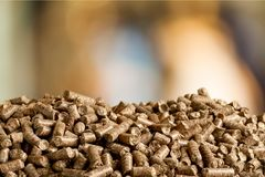 Pellets biomass close up. Close mass bio pellets pellet biomass green stock photo