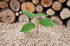 Pellets- Biomass. Young tree comes out of heap of pellets Royalty Free Stock Photography