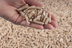 Pellets-biomassa Arkivfoto