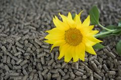Sunflower pellets - biomass. Pellets made of sunflower - renewable energy royalty free stock photos
