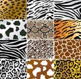 Pelli animali Fotografia Stock Libera da Diritti