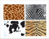 Pelli degli animali differenti su un fondo bianco Immagine Stock