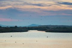 Pellicani, aironi, gabbiani, anatre ed altri uccelli sorvolare il lago Vistonida in Rodopi, Grecia fotografia stock libera da diritti