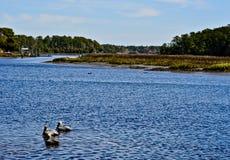 Pellicani che galleggiano nel porto Fotografie Stock Libere da Diritti