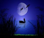 Pellicani nella luce della luna Fotografia Stock Libera da Diritti