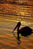 Pellicano al tramonto Fotografia Stock Libera da Diritti