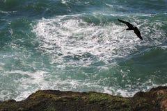 Pellicano che vola sopra una scogliera dell'oceano. Fotografie Stock