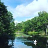 Pellicano nel parco selvaggio di vita in Darwin fotografia stock
