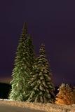 Pelliccia-alberi di notte Immagini Stock Libere da Diritti