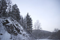Pelliccia-alberi su un pendio di montagna Fotografie Stock