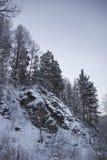 Pelliccia-alberi su un pendio di montagna Fotografia Stock