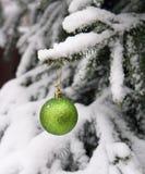 Pelliccia-albero e una sfera su una filiale Immagini Stock Libere da Diritti