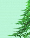 Pelliccia-albero su una priorità bassa verde Fotografia Stock Libera da Diritti