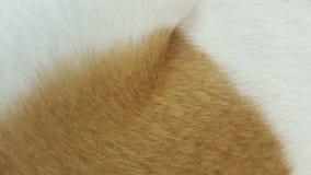 Pelliccia animale bianca di struttura Immagini Stock Libere da Diritti