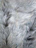 Pelliccia animale grigia Fotografia Stock Libera da Diritti