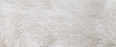 Pelliccia bianca Fotografia Stock Libera da Diritti