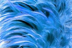 pelliccia blu dalla piuma Fotografia Stock Libera da Diritti