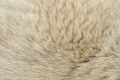 Pelliccia del cane Immagine Stock
