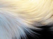 Pelliccia del cane, (5) Immagini Stock Libere da Diritti