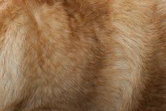 Pelliccia del cane Immagini Stock