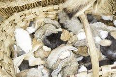 Pelliccia del coniglio Fotografie Stock