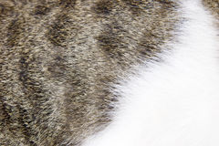 Pelliccia del gatto Immagini Stock