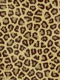 Pelliccia del giaguaro Immagini Stock