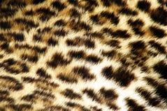 Pelliccia del leopardo Immagini Stock Libere da Diritti