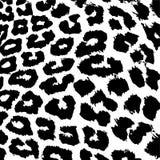 Pelliccia del leopardo Fotografia Stock