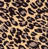 Pelliccia del leopardo di immagine come priorità bassa immagine stock