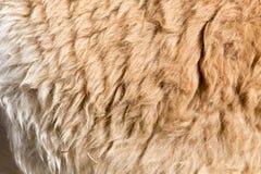 Pelliccia della lama come fondo Fotografie Stock