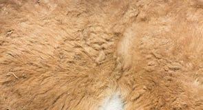 Pelliccia della lama come fondo Immagini Stock