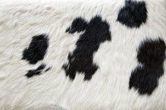 Pelliccia della mucca Fotografie Stock