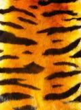 Pelliccia della tigre Immagine Stock Libera da Diritti