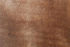 Pelliccia di Brown Fotografia Stock Libera da Diritti