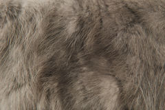Pelliccia di gray di struttura Fotografia Stock Libera da Diritti
