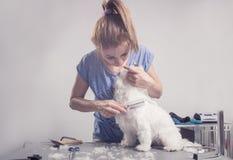 Pelliccia di spazzolatura dei peli di cane del pettine del parrucchiere Fotografie Stock Libere da Diritti