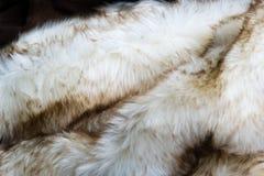 Pelliccia macchiata bianca Fotografie Stock