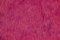 Pelliccia rosa Immagini Stock