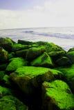 Pelliccia verde Immagini Stock Libere da Diritti