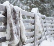 Pelliccia Yllas Finlandia della renna fotografie stock libere da diritti