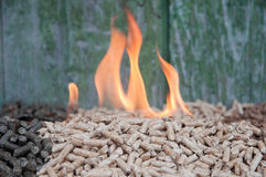Pelllets- biomass Fotografia Royalty Free
